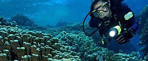 Dive Lights | Scuba